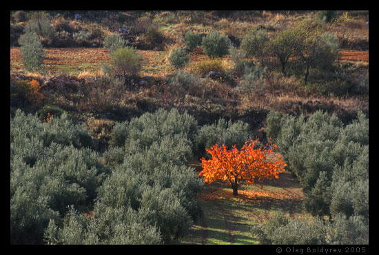 Oilve groves, Andalucia